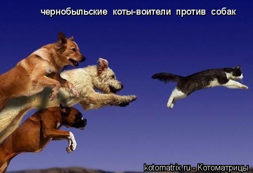 Котоматрица: чернобыльские  коты-воители  против  собак