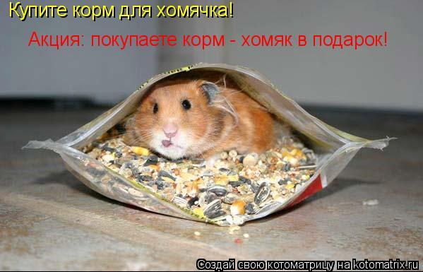 Котоматрица: Купите корм для хомячка!  Акция: покупаете корм - хомяк в подарок!