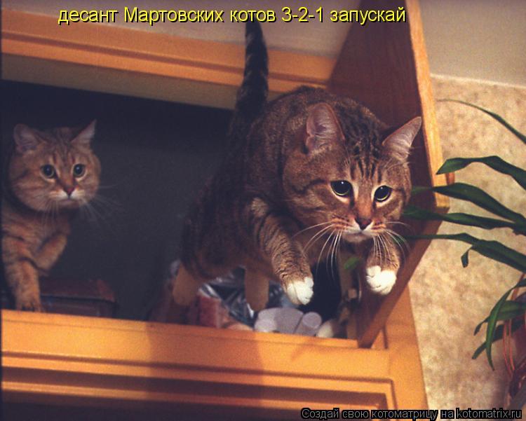 Котоматрица: десант Мартовских котов 3-2-1 запускай