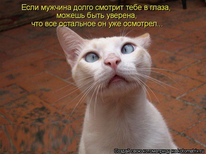Котоматрица: Если мужчина долго смотрит тебе в глаза, можешь быть уверена, что все остальное он уже осмотрел...