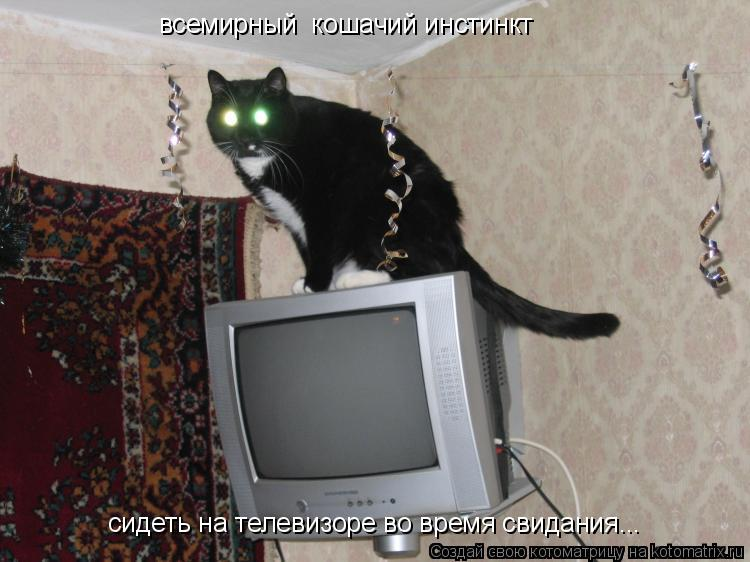 Котоматрица: всемирный  кошачий инстинкт  сидеть на телевизоре во время свидания...