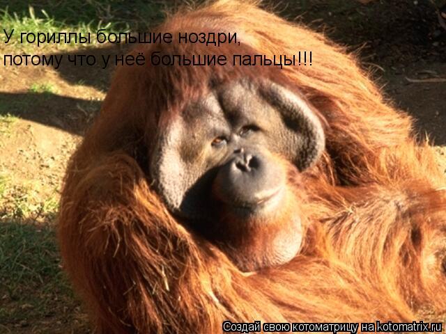 Котоматрица: У гориллы большие ноздри, потому что у неё большие пальцы!!!
