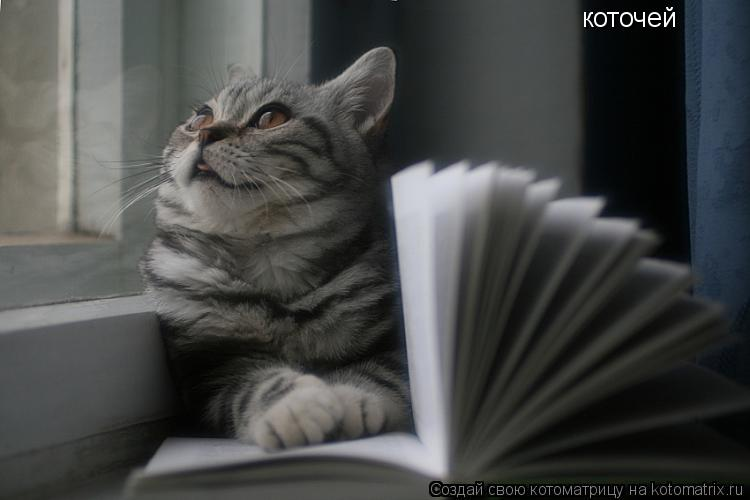 Котоматрица: коточей