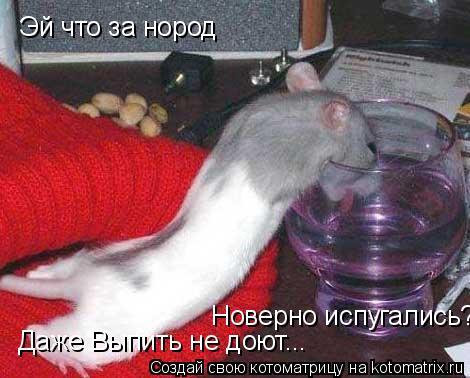 Котоматрица: Эй что за нород Даже Выпить не доют... Новерно испугались???