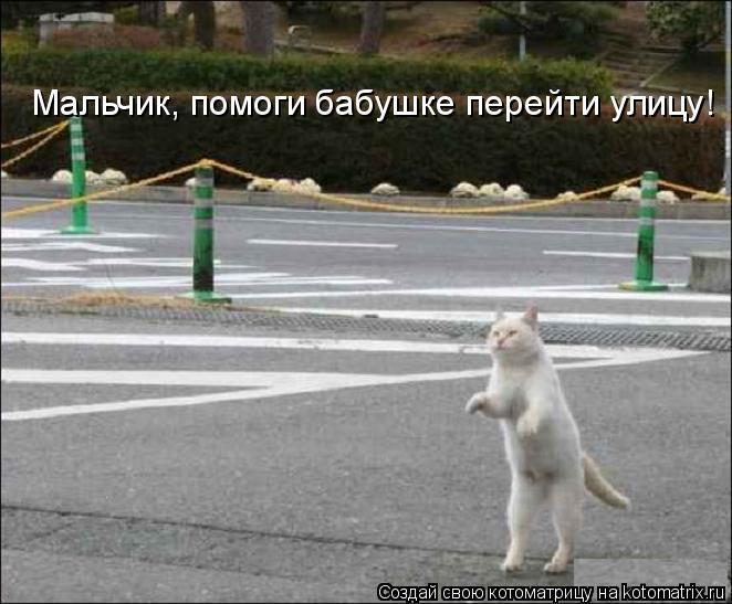 Котоматрица: Мальчик, помоги бабушке перейти улицу!
