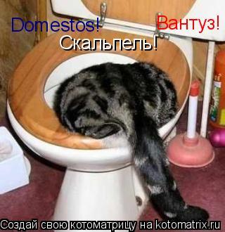 Котоматрица: Domestos! Вантуз! Скальпель!
