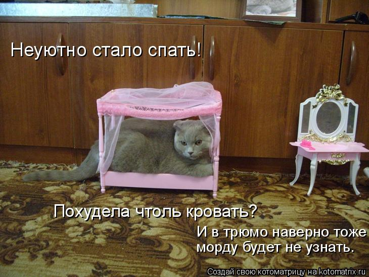 Котоматрица: Неуютно стало спать! Похудела чтоль кровать? И в трюмо наверно тоже морду будет не узнать.