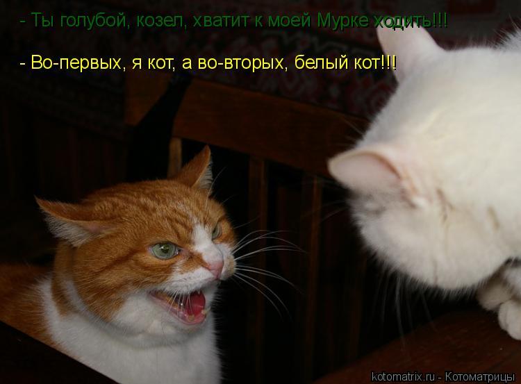 Котоматрица: - Во-первых, я кот, а во-вторых, белый кот!!! - Ты голубой, козел, хватит к моей Мурке ходить!!!