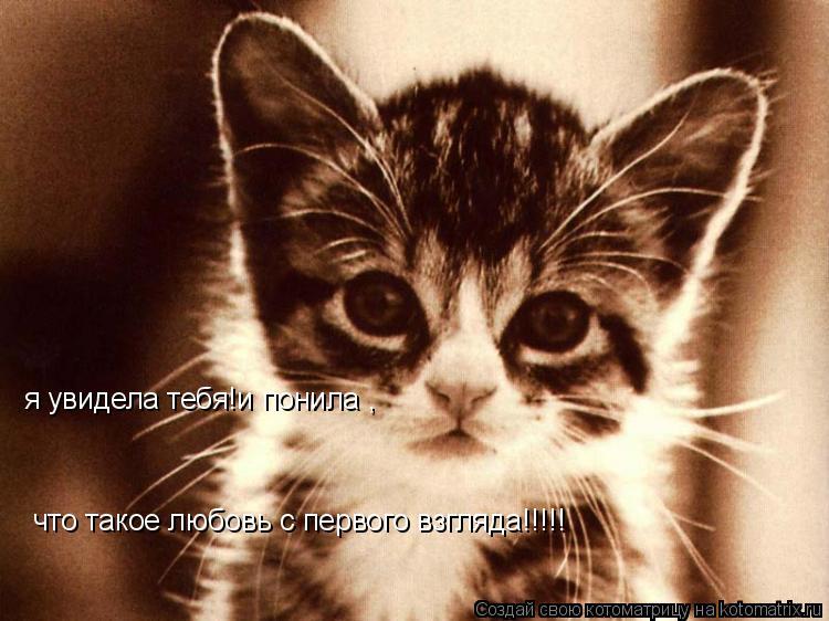 Котоматрица: я увидела тебя!и понила , что такое любовь с первого взгляда!!!!!