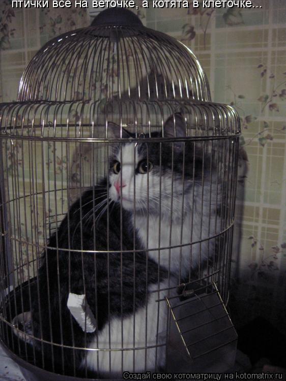 Котоматрица: птички все на веточке, а котята в клеточке...