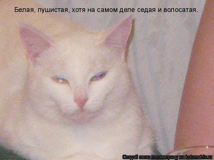 Котоматрица: Белая, пушистая, хотя на самом деле седая и волосатая.