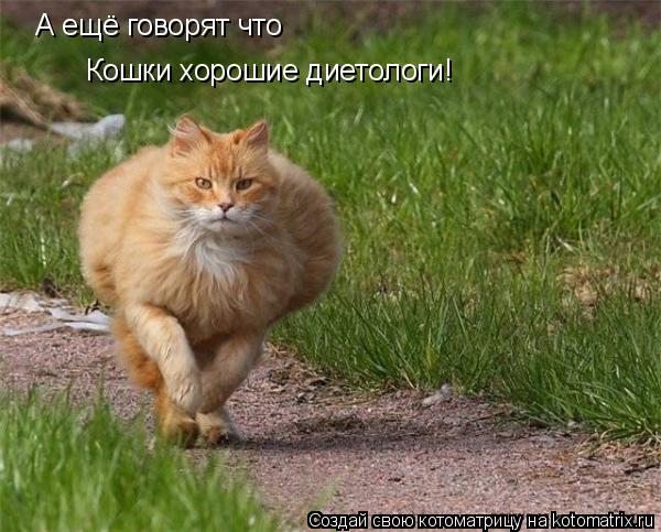 Котоматрица: А ещё говорят что Кошки хорошие диетологи!