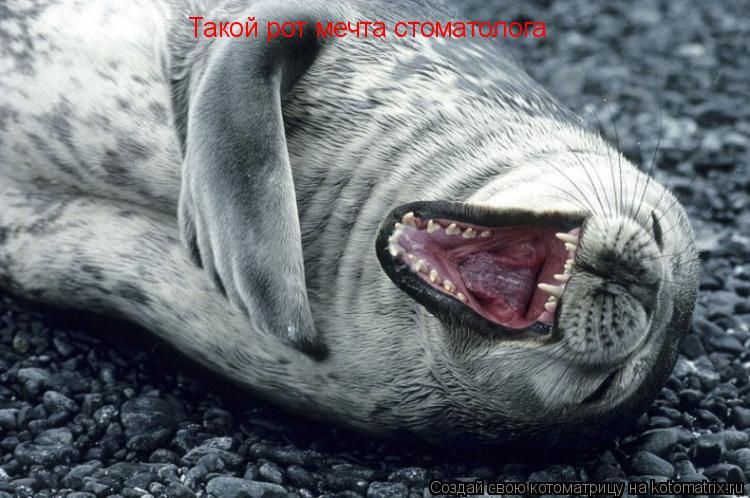 Котоматрица: Такой рот мечта стоматолога