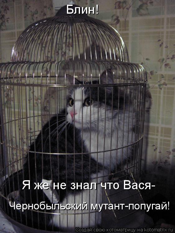 Котоматрица: Блин! Я же не знал что Вася- Чернобыльский мутант-попугай!