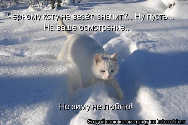 Котоматрица: Чёрному коту не везёт, значит?.. Ну пусть...  На ваше осмотрение... Но зиму не люблю!.