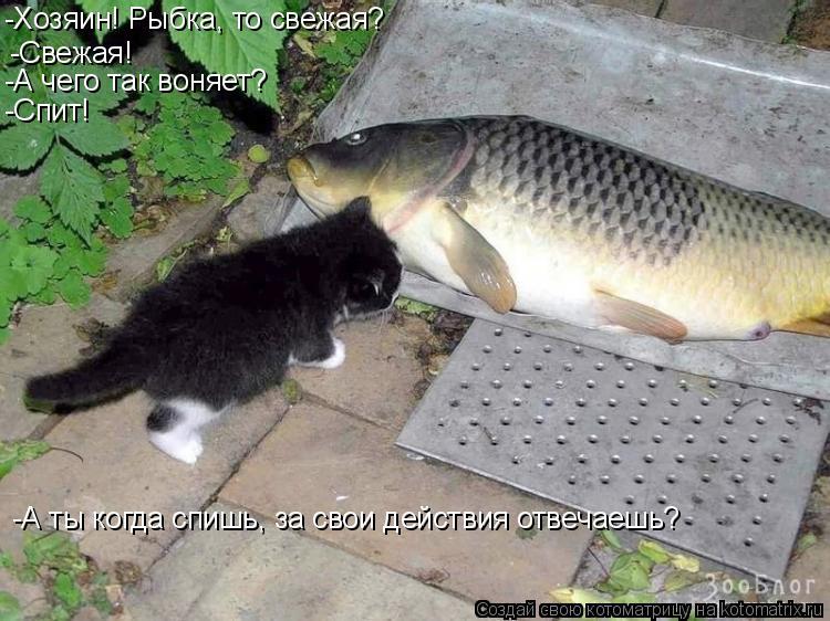 Котоматрица: -Свежая! -А ты когда спишь, за свои действия отвечаешь? -А чего так воняет? -Спит! -Хозяин! Рыбка, то свежая?