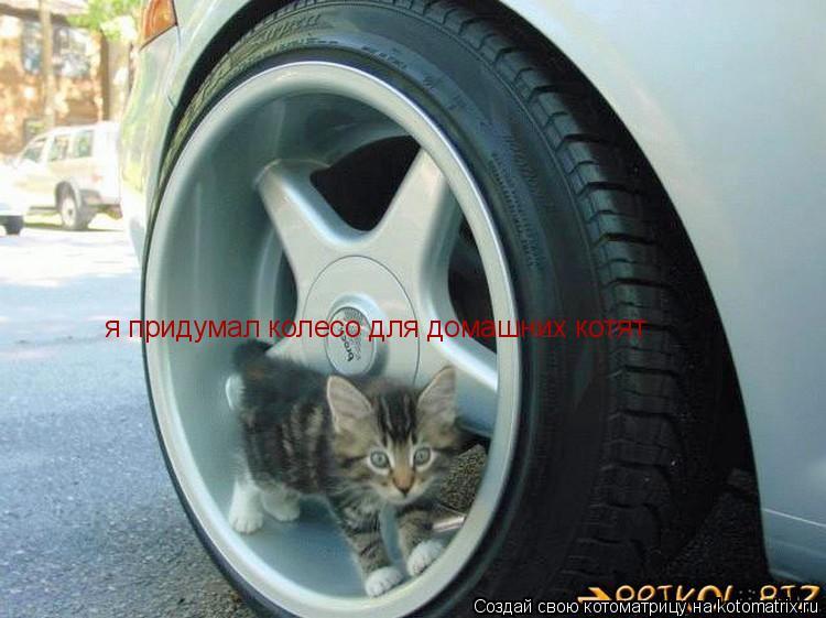 Котоматрица: я придумал колесо для домашних котят