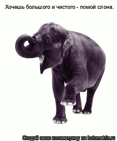 Котоматрица: Хочешь большого и чистого - помой слона.