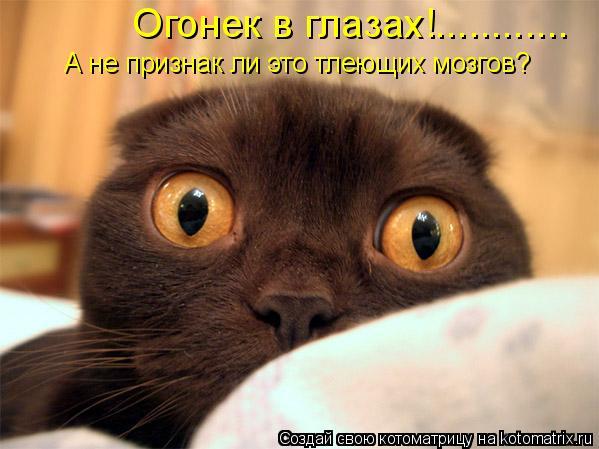 Котоматрица: Огонек в глазах!............ А не признак ли это тлеющих мозгов?
