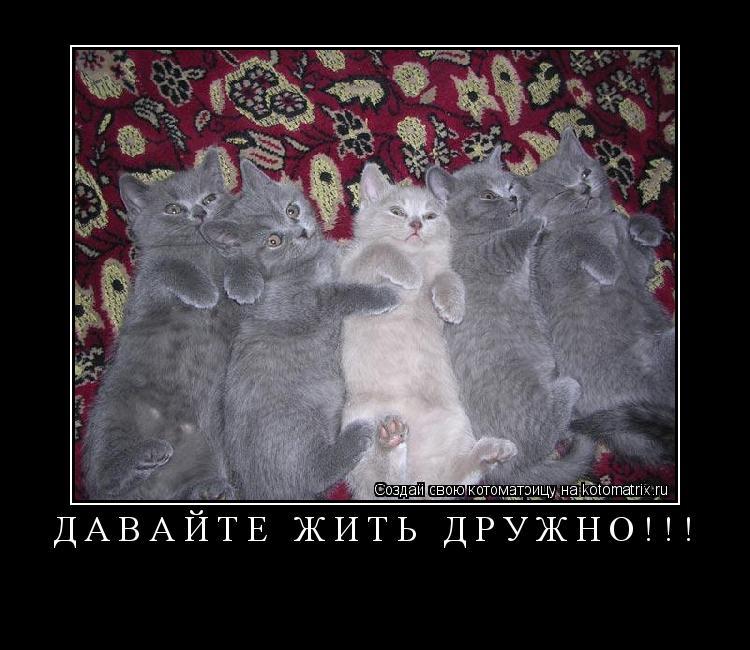 Котоматрица: Давайте жить ДРУЖНО!!!