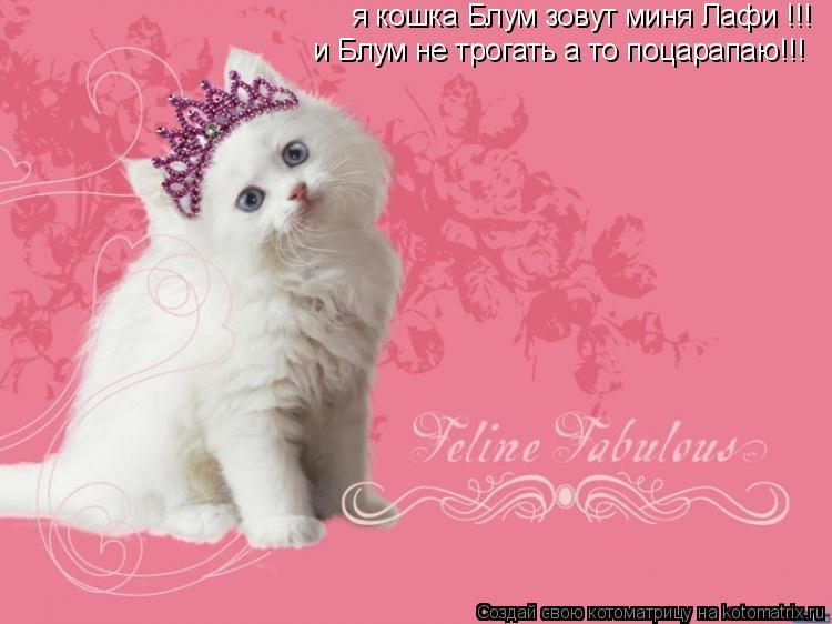 Котоматрица: я кошка Блум зовут миня Лафи !!! и Блум не трогать а то поцарапаю!!!