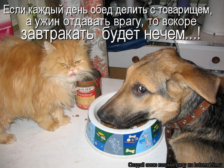 Котоматрица: Если каждый день обед делить с товарищем,  а ужин отдавать врагу, то вскоре  завтракать  будет нечем...!