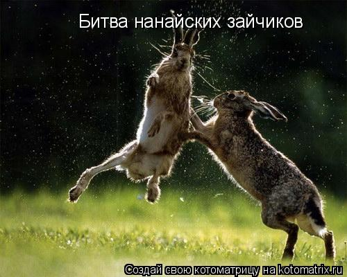 Котоматрица: Битва нанайских зайчиков