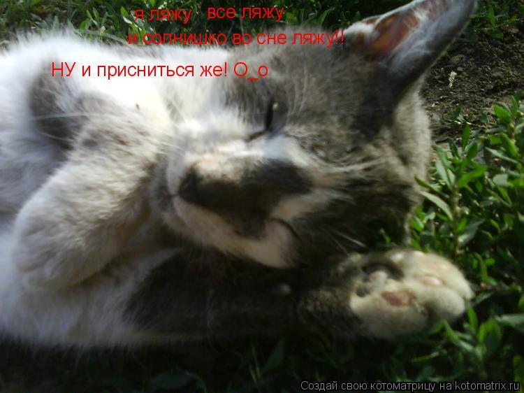 Котоматрица: я ляжу все ляжу и солнишко во сне ляжу!! НУ и присниться же! О_о