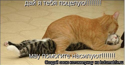 Котоматрица: дай я тебя поцелую!!!!!!!!  мау помогите насилуют!!!!!!!