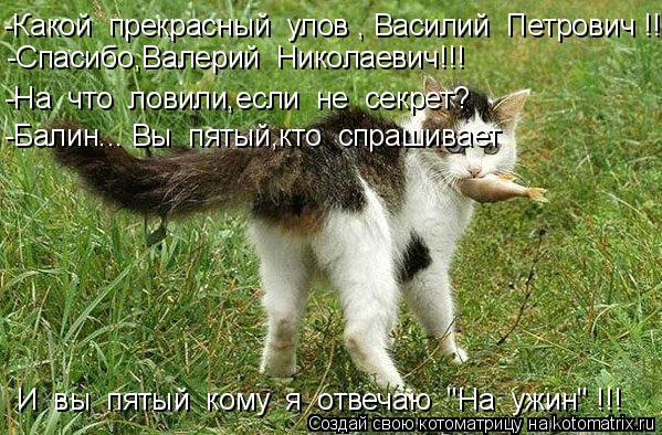 Котоматрица: -Какой  прекрасный  улов , Василий  Петрович !!! -Спасибо,Валерий  Николаевич!!! -На  что  ловили,если  не  секрет? -Балин... Вы  пятый,кто  спрашивае