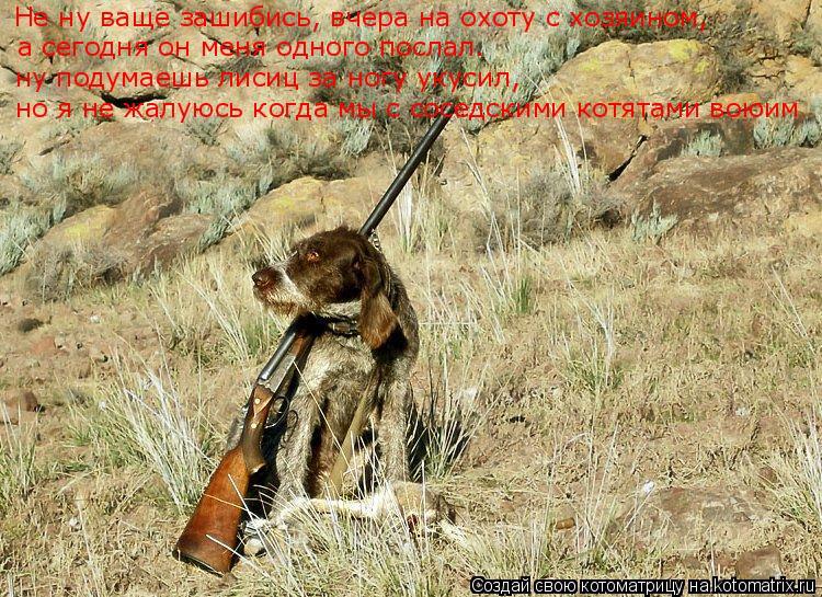 Котоматрица: Не ну ваще зашибись, вчера на охоту с хозяином, а сегодня он меня одного послал. ну подумаешь лисиц за ногу укусил, но я не жалуюсь когда мы с
