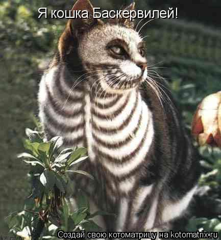 Котоматрица: Я кошка Баскервилей!
