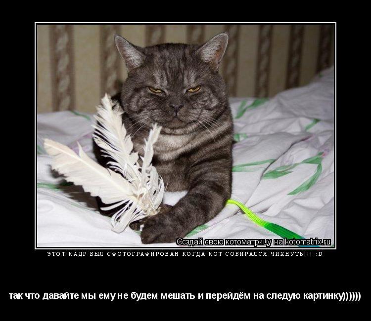 Котоматрица: этот кадр был сфотографирован когда кот собирался чихнуть!!! :D  так что давайте мы ему не будем мешать и перейдём на следую картинку))))))