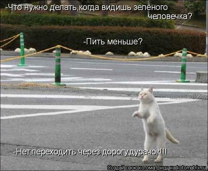 Котоматрица: -Что нужно делать,когда видишь зелёного   человечка?  -Пить меньше?  -Нет,переходить через дорогу,дурачок!!!