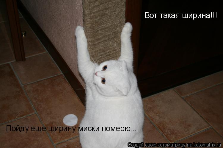 Котоматрица: Вот такая ширина!!! Пойду еще ширину миски померю...