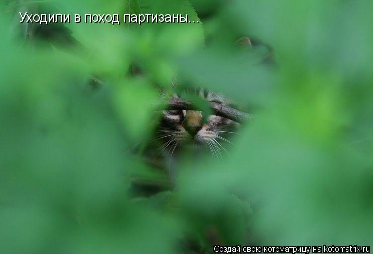 Котоматрица: Уходили в поход партизаны...