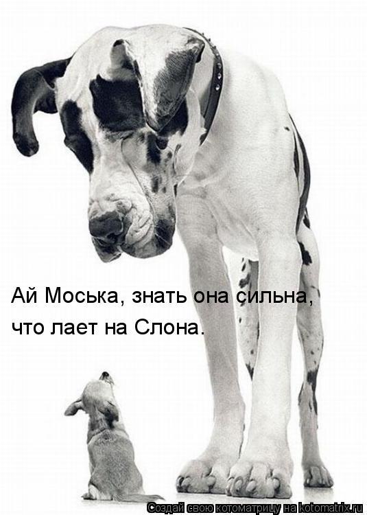 Котоматрица: Ай Моська, знать она сильна, что лает на Слона.