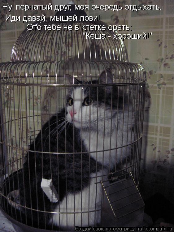 """Котоматрица: """"Кеша - хороший!"""" Это тебе не в клетке орать: Иди давай, мышей лови! Ну, пернатый друг, моя очередь отдыхать."""