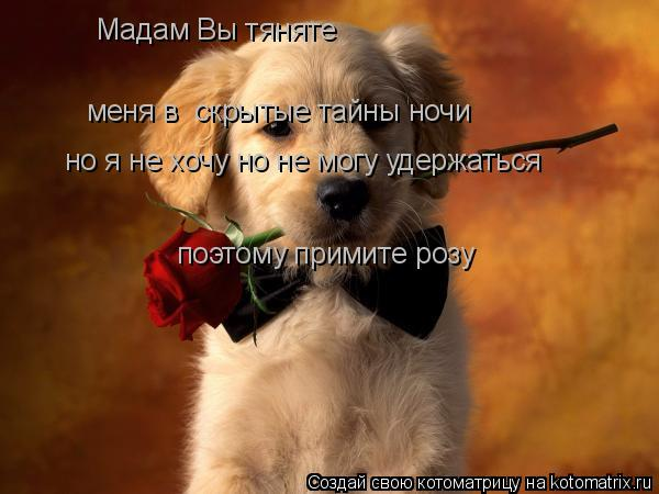 Котоматрица: Мадам Вы тяняте меня в  скрытые тайны ночи но я не хочу но не могу удержаться по поэтому примите розу