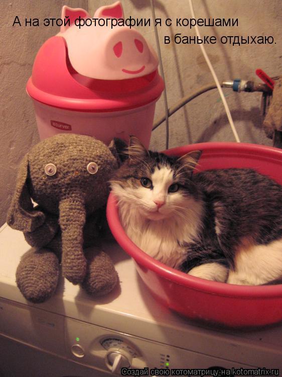 Котоматрица: А на этой фотографии я с корешами  в баньке отдыхаю.