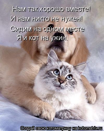 Котоматрица: Нам так хорошо вместе! И нам никто не нужен! Сидим на одном месте Я и кот на ужин.