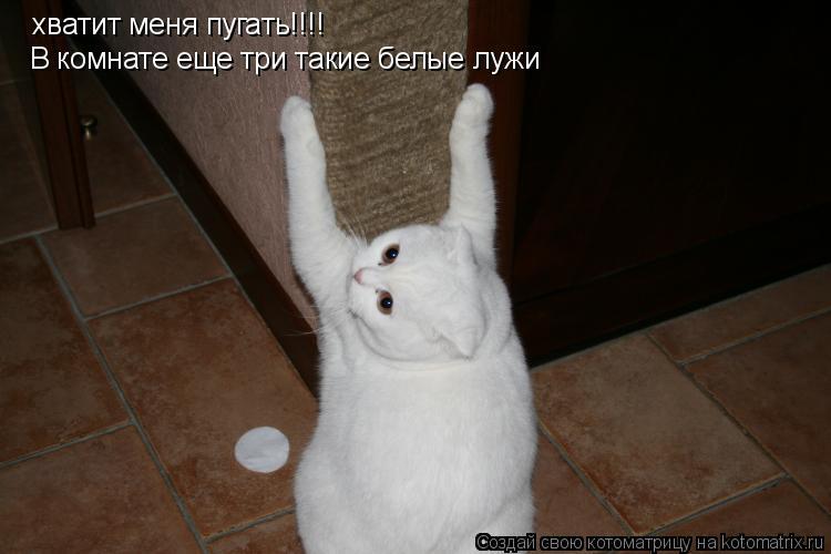 Котоматрица: хватит меня пугать!!!! В комнате еще три такие белые лужи