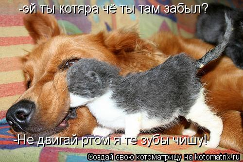 Котоматрица: -эй ты котяра чё ты там забыл? -Не двигай ртом я те зубы чишу!