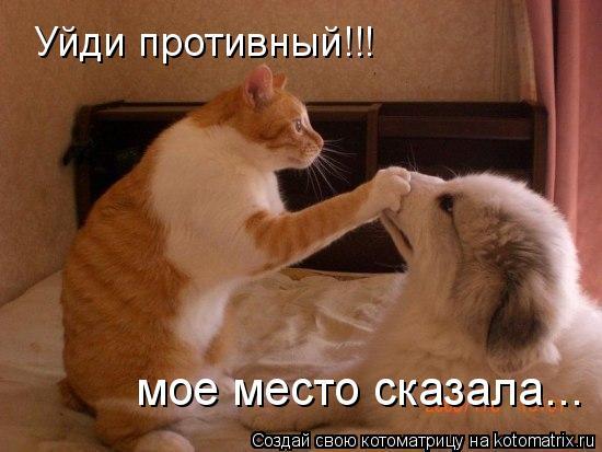 Котоматрица: Уйди противный!!! мое место сказала...