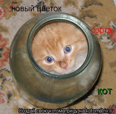 Котоматрица: новый цветок сорта кот