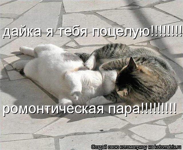 Котоматрица: дайка я тебя поцелую!!!!!!!!!!!!!!!! ромонтическая пара!!!!!!!!!