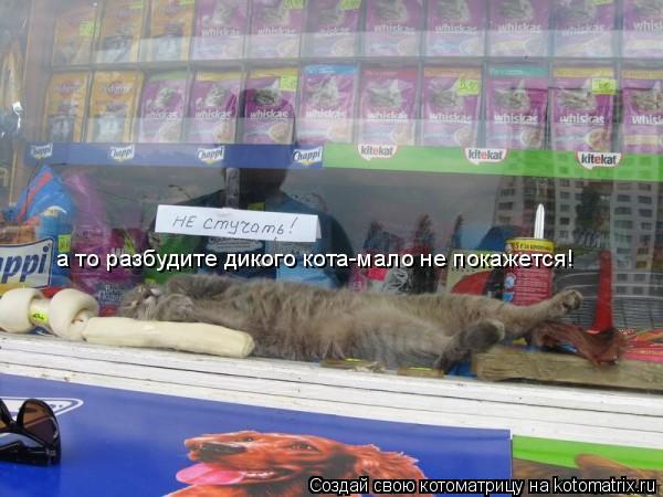 Котоматрица: а то разбудите дикого кота-мало не покажется!