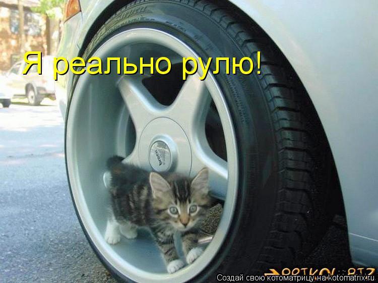 Котоматрица: Я реально рулю!