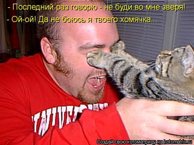 Котоматрица: - Последний раз говорю - не буди во мне зверя! - Ой-ой! Да не боюсь я твоего хомячка...