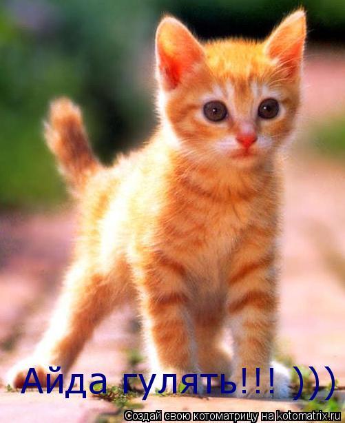 Котоматрица: Айда гулять!!! ))) Айда гулять!!! )))